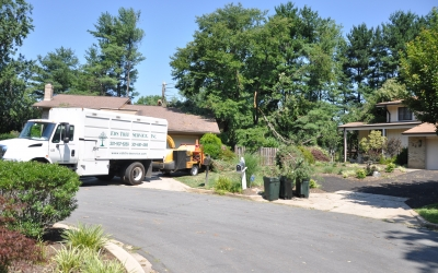 Crane Removal for Fallen Pine Tree, Rockville MD