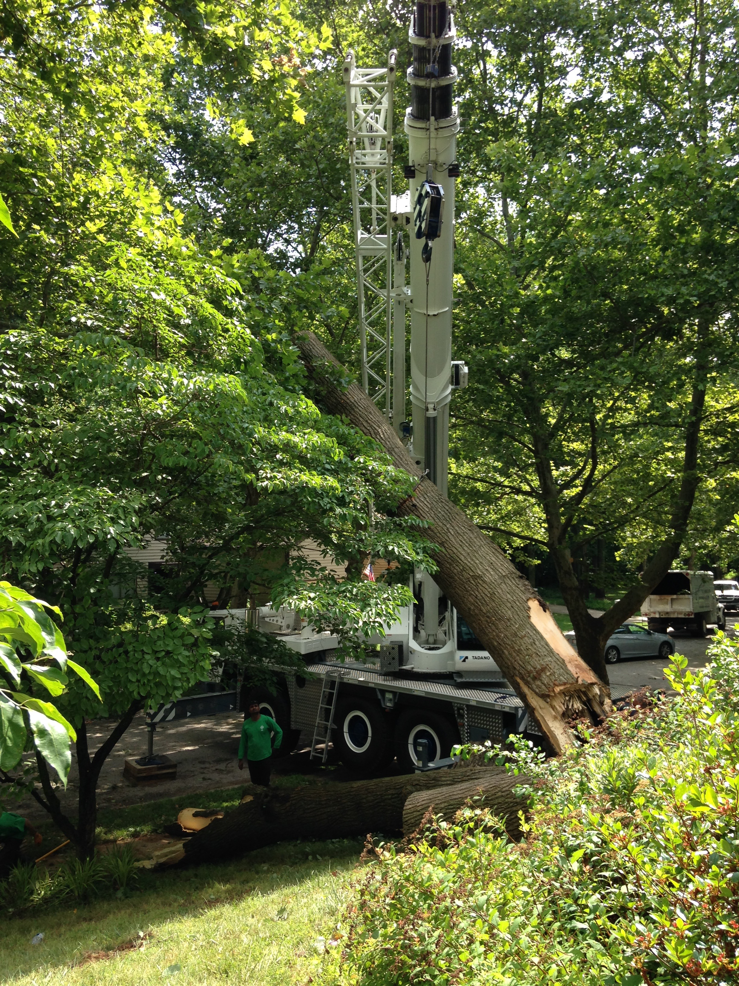 Licensed Tree Removal Services In Dc And Maryland Ed S