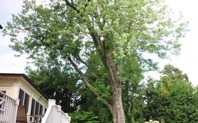 Oak and Crane Removal, Bethesda MD