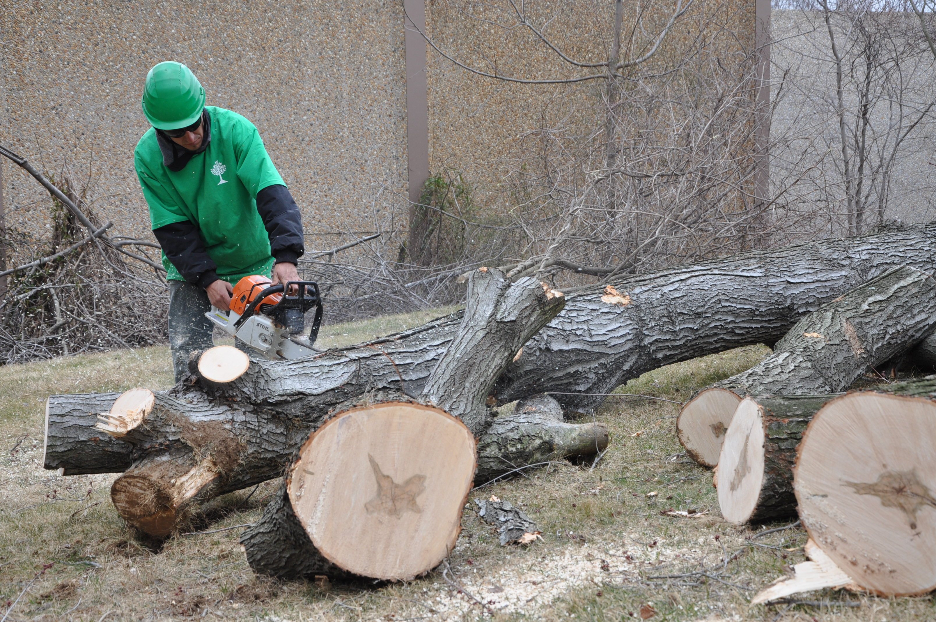 licensed and insured expert tree removal reviews ed u0027s tree services