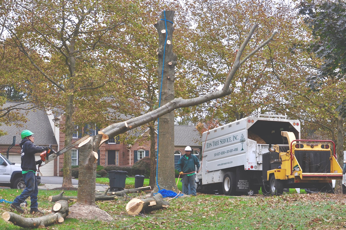 Licensed and Insured Tree Removal