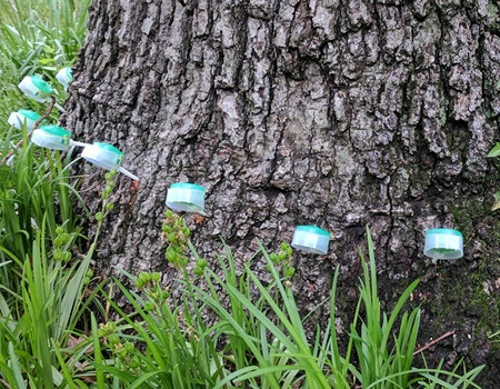 Fall Tree Fertilization