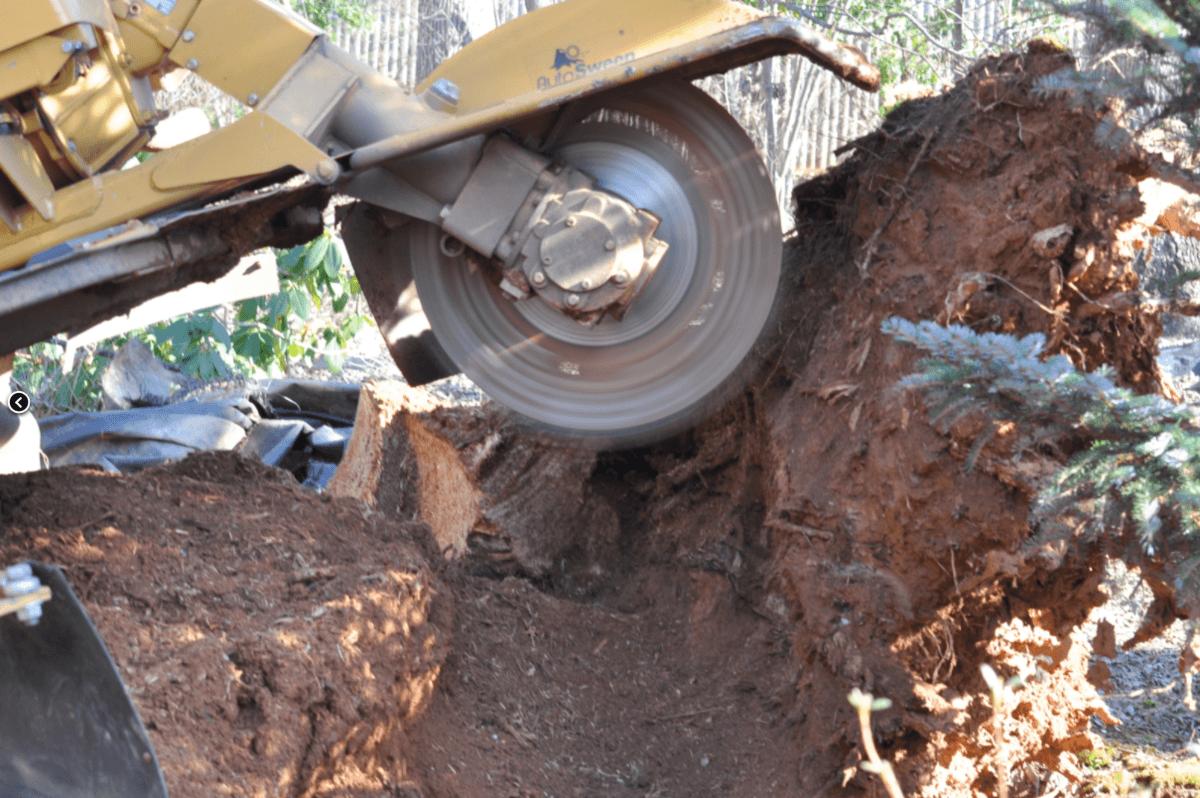 Professional Stump Removal