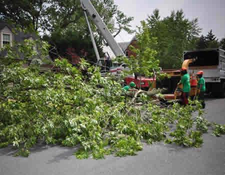 Bethesda Emergency Tree Removal