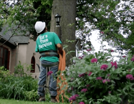 Emergency Tree Removal in Potomac, MD