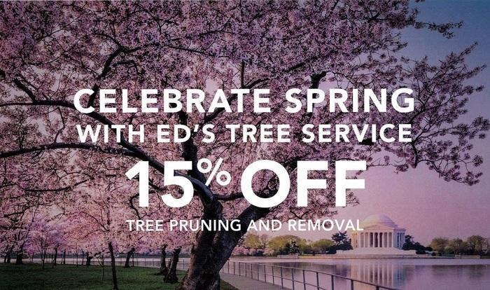 tree removal service