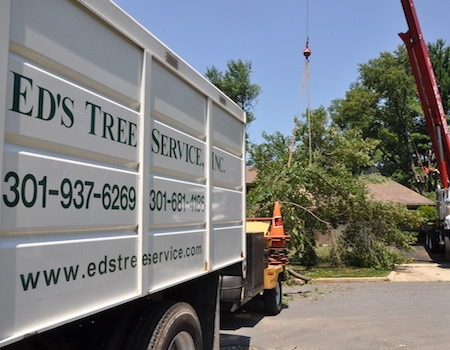 Rockville emergency tree removal
