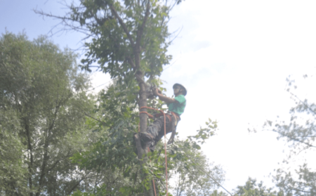 Licensed and Insured Rockville Tree Removal Company