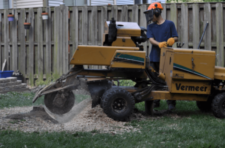 Professional Stump Removal Rockville