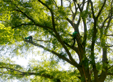 Bethesda Maryland Summer Tree Care