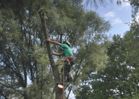 Bethesda Maryland Tree Removal Company