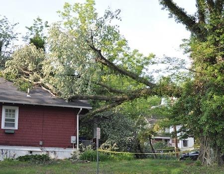 Potomac Tree Removal Company