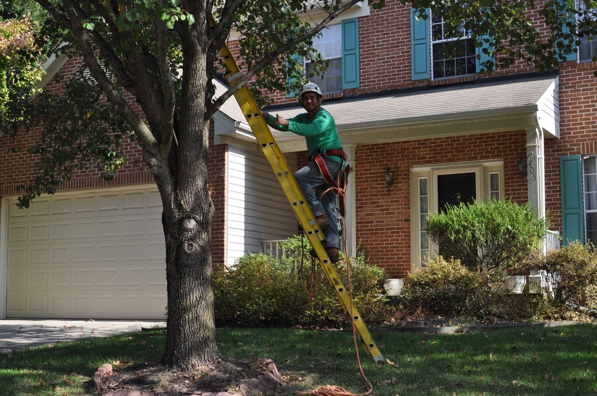 Licensed Tree Trimming Company Rockville