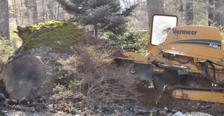 Licensed Stump Removal In Bethesda Maryland