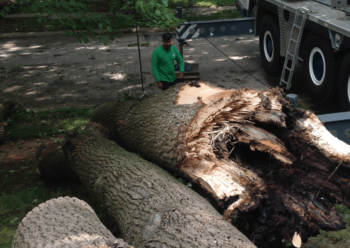 Licensed Tree Removal Company College Park
