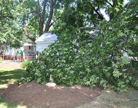Potomac tree removal