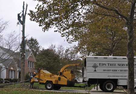 Licensed and Insured Tree Removal in Rockville Maryland