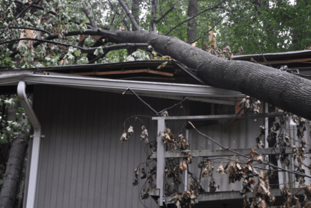 Emergency Tree Removal in Silver Spring