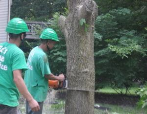 rockville tree removal company