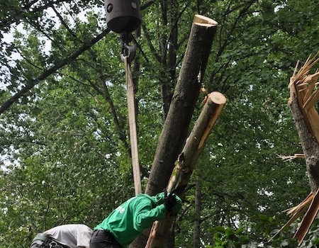 Silver Spring emergency tree removal