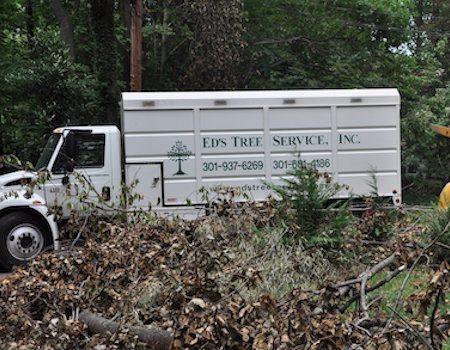 Emergency tree removal Potomac. MD