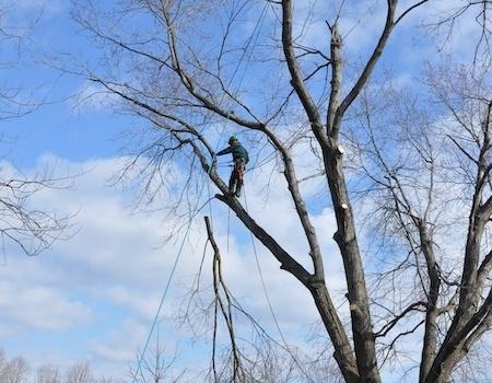 silver spring tree removal