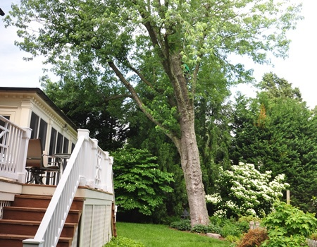 Rockville Tree Removal