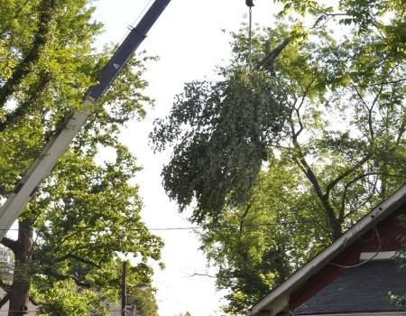 Hyattsville Tree Removal Company