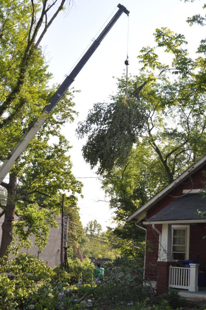 Hyattsville Tree Removal Company