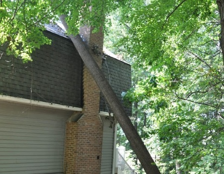 Emergency Tree Removal in Chevy Chase, MD