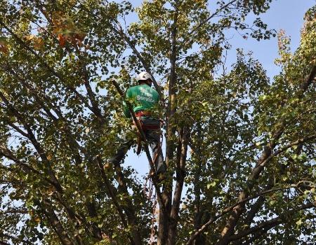 Hyattsville, MD Tree Trimming