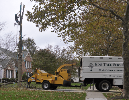 Adelphi Tree Removal Company