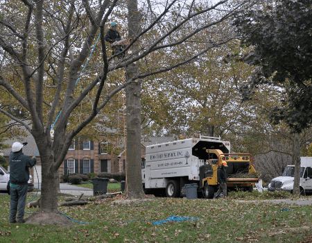 Gaithersburg, MD Tree Removal Company