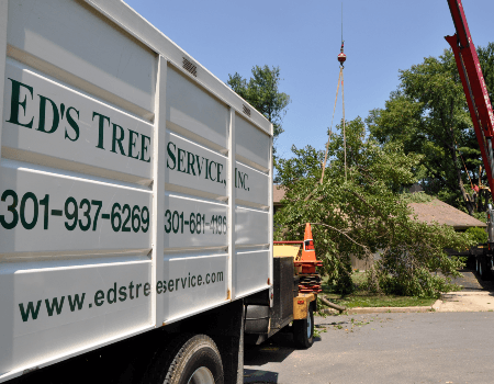 Bethesda, MD Professional Tree Care Services
