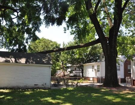 Emergency Tree Removal in Hyattsville