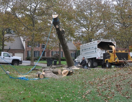 Tree Removal Company in Gaithersburg, MD