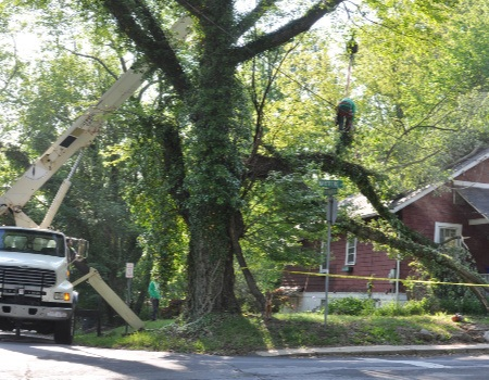 Emergency Tree Removal in Bethesda, MD