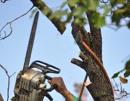 Tree Removal in Hyattsville, MD