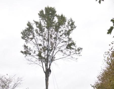 Tree Removal Service in Kensington, MD