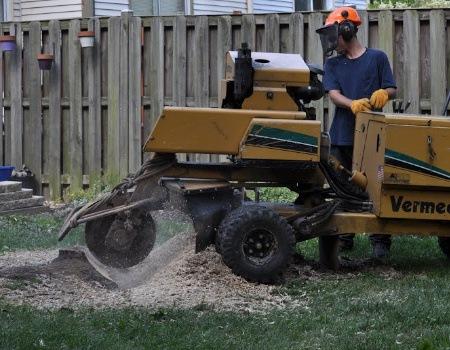 Bethesda Stump Removal