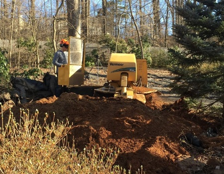 Stump Removal in Laurel, MD