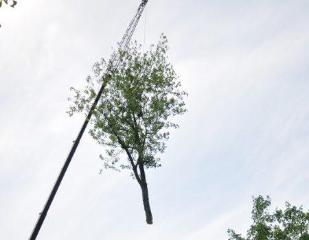 Beltsville Tree Removal