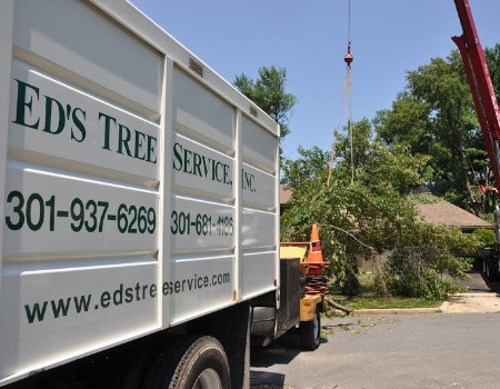 Gaithersburg Tree Removal