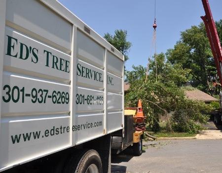 Gaithersburg Tree Removal