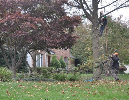 Chevy Chase Tree Removal