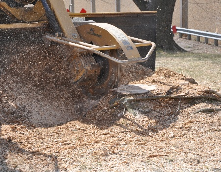 Stump Removal Hyattsville