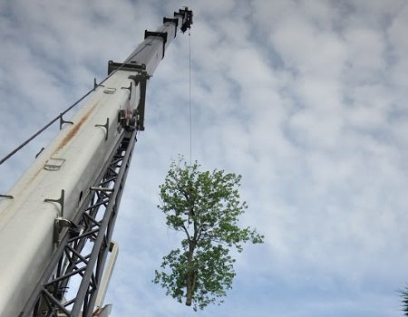 Emergency Tree Removal Maryland