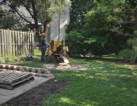 Stump Removal Laurel MD