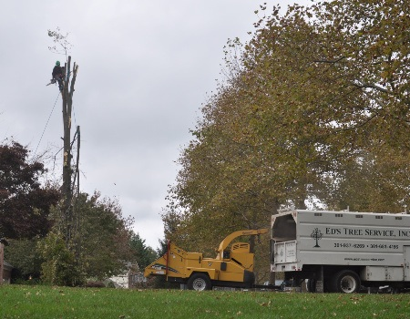 Tree Removal Chevy Chase