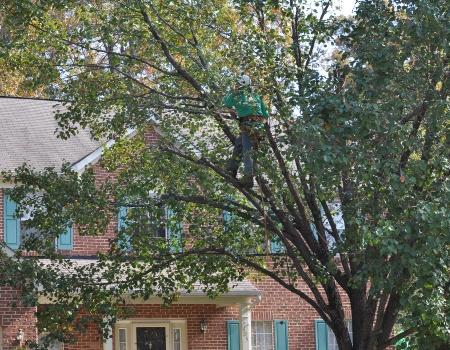 Maryland Tree Service